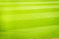 Campo de jogos novo da textura nova natural da grama verde Imagens de Stock Royalty Free