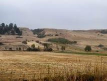 Campo de la agricultura Fotografía de archivo libre de regalías