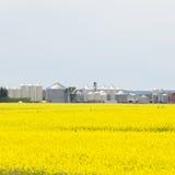 Campo de la agricultura de la rabina del canola de los silos de grano Foto de archivo libre de regalías