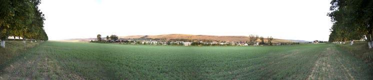 Campo de la alfalfa Imagen de archivo libre de regalías