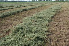 Campo de la alfalfa con el cortador 3 Fotos de archivo libres de regalías