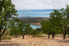 Campo de la almendra por un lago Foto de archivo libre de regalías