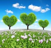 Campo de la amapola con los árboles en la forma del corazón Fotografía de archivo