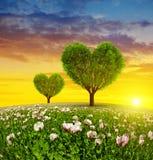 Campo de la amapola con los árboles en la forma del corazón Imagenes de archivo