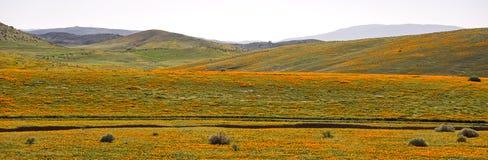Campo de la amapola del valle del antílope Foto de archivo