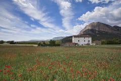 Campo de la amapola en los Pirineos españoles en primavera fotografía de archivo