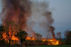 Campo de la caña de azúcar que quema en Tailandia imagen de archivo