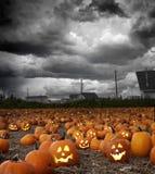 Campo de la calabaza de Halloween Imágenes de archivo libres de regalías