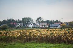 Campo de la calabaza en granja orgánica Fotos de archivo