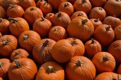 Campo de la calabaza para Halloween Fotos de archivo libres de regalías