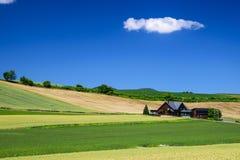 Campo de la cebada con la cabaña en la provincia de Biei, Hokkaido, Japón Imagenes de archivo