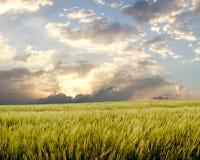 Campo de la cebada durante día tempestuoso Imagenes de archivo