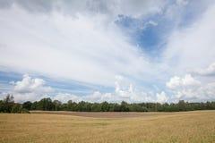 Campo de la cebada rodeado por el bosque Foto de archivo
