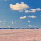 Campo de la cebada y cuadrado grandes de Instagram del cielo azul fotografía de archivo libre de regalías
