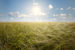 Campo de la cebada y generador de viento Fotos de archivo libres de regalías