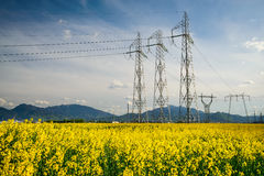 Campo de la colza y electricidad de la línea eléctrica Fotografía de archivo