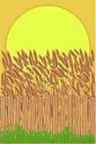 Campo de la cosecha Imagen de archivo libre de regalías