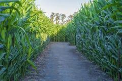 Campo de la cosecha con el camino de tierra en la salida del sol foto de archivo