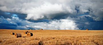 Campo de la cosecha con las nubes de tormenta del verano Foto de archivo libre de regalías