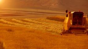 Campo de la cosecha del trigo almacen de video