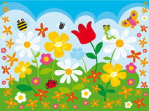 Campo de la flor Fotografía de archivo