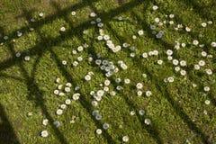Campo de la flor de la margarita Imágenes de archivo libres de regalías
