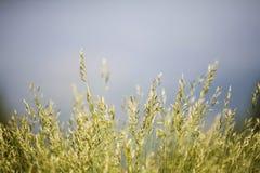 Campo de la hierba Imágenes de archivo libres de regalías
