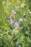 Campo de la hierba Fotos de archivo libres de regalías