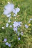 Campo de la hierba Fotografía de archivo