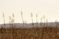 Campo de la hierba Imagenes de archivo