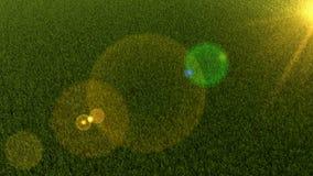 Campo de la hierba con la llamarada de la lente 3d rinden Ejemplo gráfico Fondo Fotos de archivo