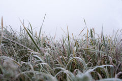 Campo de la hierba congelada Fotos de archivo libres de regalías