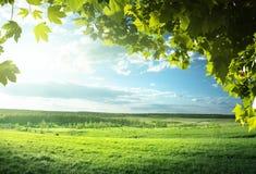 Campo de la hierba de la primavera Imagen de archivo libre de regalías
