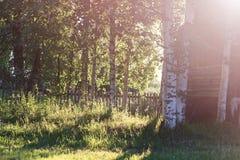 Campo de la hierba de la puesta del sol Fotos de archivo