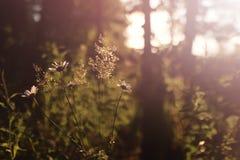 Campo de la hierba de la puesta del sol Fotografía de archivo