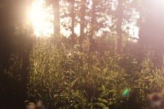 Campo de la hierba de la puesta del sol Imagenes de archivo