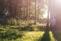 Campo de la hierba de la puesta del sol Foto de archivo
