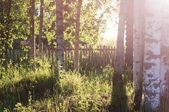 Campo de la hierba de la puesta del sol Foto de archivo libre de regalías