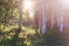 Campo de la hierba de la puesta del sol Imágenes de archivo libres de regalías