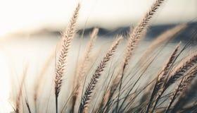 Campo de la hierba durante puesta del sol Fotografía de archivo libre de regalías