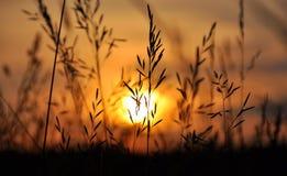 Campo de la hierba durante puesta del sol Fotos de archivo libres de regalías