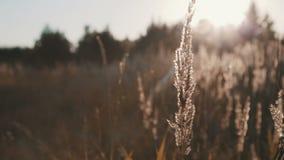 Campo de la hierba durante puesta del sol metrajes