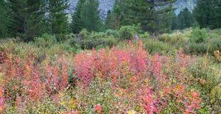 Campo de la hierba en las montañas de Altai, Rusia del otoño Foto de archivo