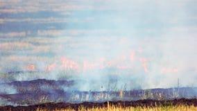 Campo de la hierba seca y fresca que quema metrajes