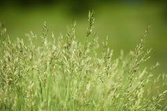 Campo de la hierba verde Fotografía de archivo