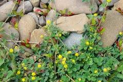Campo de la hierba verde y de los wildflowers Foto de archivo libre de regalías