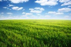 Campo de la hierba verde y del cielo nublado azul Imagen de archivo libre de regalías