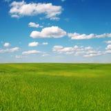 Campo de la hierba verde y del cielo nublado azul Fotografía de archivo