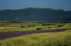 Campo de la lavanda, cerca de Kazanlak, Bulgaria Foto de archivo libre de regalías