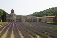 Campo de la lavanda en Provence Fotos de archivo libres de regalías